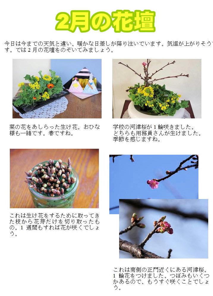 2月の花壇