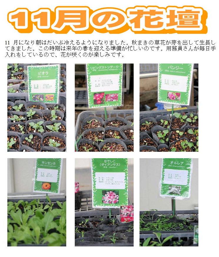 11月の花壇