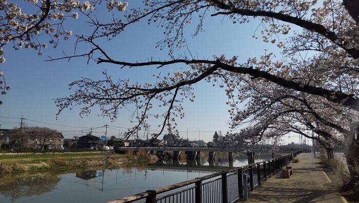 3月24日古利根川・埼葛橋