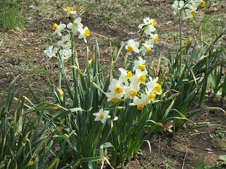 飯沼中の春