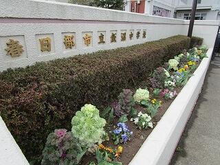 正門前の花壇も春の様相です