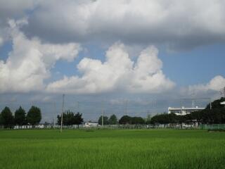 夏本番!南側の田んぼから見た飯沼中