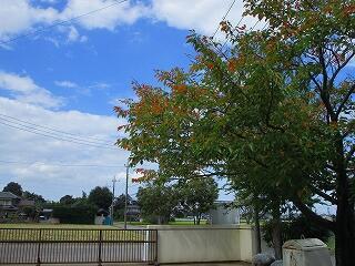 秋空と紅葉の正門