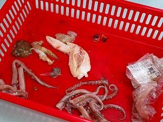 2年1組 理科 生物の体のつくり イカの解剖