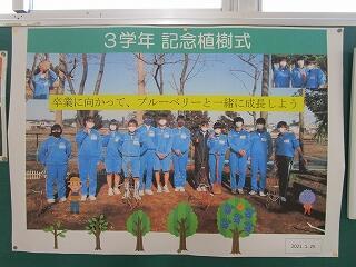 3年生廊下の掲示物 昨日の植樹式の報告
